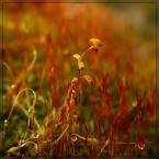"""Ravkosz """"wiosny wyglądanie #1"""" (2007-02-27 21:29:56) komentarzy: 58, ostatni: świetne kolory..."""