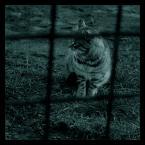 "napanjuma ""kółko i kot"" (2007-03-05 00:02:01) komentarzy: 10, ostatni: och..."