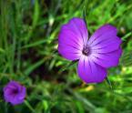 """KarmazyNowy """"kwiatki dla Beatki"""" (2007-03-08 08:45:13) komentarzy: 52, ostatni: :)"""