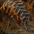 """Ravkosz """"o zimie bajanie #10"""" (2007-03-08 19:30:14) komentarzy: 89, ostatni: Bardzo ładne"""