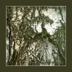"""koszmar69 """"brzoza"""" (2007-03-09 01:18:12) komentarzy: 13, ostatni: Gdybym mógł to bym wpisał się kilka razy bo to wyborny pomysł na te """"mapy topografii drzewnej""""  :)"""