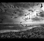 """AlinaJJJ """""""" (2007-03-10 22:49:03) komentarzy: 108, ostatni: Ptaki ciernistych krzewów."""