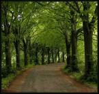 """Church Of Skatan """"Nie mam zielonego pojęcia"""" (2007-03-12 20:58:45) komentarzy: 6, ostatni: ładne zdjęcie, dobry tytuł"""