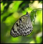 """DeMarcus """"..."""" (2007-03-25 20:50:18) komentarzy: 22, ostatni: WYBITNE!!!... motyl bardzo ładnie się prezentuje, nie trzeba go szukać... głębia ostrości też super"""