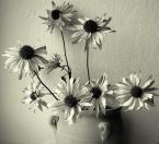 """Anavera """". . ."""" (2007-03-29 13:57:59) komentarzy: 6, ostatni: fajne kwiatulki. takie pokraczne, ze az wzruszaja:)"""