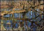 """BALTORO """"wiosna w rezerwacie Wrzosy"""" (2007-03-29 14:06:56) komentarzy: 4, ostatni: poczatkowo wzrok się gubi ale po chwili, jak się przyjrzeć dokładniej, można docenić kompozycję i dobra jakośc zdjęcia - więc razem +"""