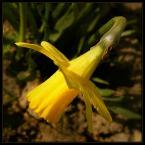 """beige """"..."""" (2007-03-29 20:01:53) komentarzy: 20, ostatni: chapeau bas!!! pekne:)"""