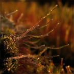 """Ravkosz """"leśne bibeloty #1"""" (2007-03-29 20:24:36) komentarzy: 53, ostatni: alez przepieknie..."""