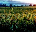 """pointofview """"Chropowatość i cierpkość zieleni"""" (2007-04-01 00:35:27) komentarzy: 6, ostatni: (milo)"""