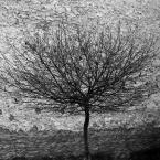 """Nickita """""""" (2007-04-03 23:35:18) komentarzy: 16, ostatni: Alexfive - intuicja mnie nie myliła.Wiedziałam, że napewno skomentujesz moje drzewko :)"""