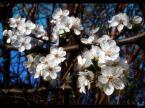 """Chris A """"Moda na flowersy drzewne :)"""" (2007-04-04 10:40:18) komentarzy: 3, ostatni: przydało by się troszkę ostrości, ale ogólnie zdjęcie podoba się :)"""