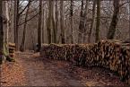 """pespe """"Z ponurnika chaszczowego Błotniaka (7)"""" (2007-04-09 17:12:34) komentarzy: 10, ostatni: Moi Drodzy, widzę, że przyjdzie mi wdziać gumofilce i znów do lasu... Kurde ;-) Madame: Błotniak jako figura platońska nie jest ograniczony terytorialnie. Z pewnością występuje tez w Kampinosie. Wystarczy mocno wpatrzyć się w słoje ściętego pnia..."""