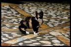 """reminatoreksus """"Mrau mrau camuflage"""" (2007-04-11 11:51:01) komentarzy: 10, ostatni: hehe super, super"""