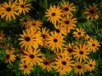 """ulka kalinowska """"Niewiosenne słońca"""" (2007-04-11 21:05:30) komentarzy: 27, ostatni: ładne :)"""