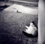 "eclecte ""kiciuśmiciuś"" (2007-04-13 23:24:34) komentarzy: 9, ostatni: nie bo kotka^^"