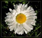 """notamus """"wiosennie"""" (2007-04-15 21:01:19) komentarzy: 7, ostatni: Bardzo ładnie, świeżo. Ja chcę wiosnę!"""