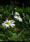 """Chris A """"Flower power :)"""" (2007-04-16 17:11:44) komentarzy: 1, ostatni: Sie chyba nie podoba :) a szkoda :) bo to dla was te flowersy :D"""