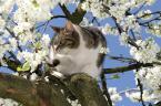 """didimo """"Wiosenne polowanie"""" (2007-04-16 18:13:49) komentarzy: 7, ostatni: kot sfocony wiosennie :D"""