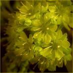 """koszmar69 """"wiosennie#4"""" (2007-04-18 22:09:02) komentarzy: 17, ostatni: przyjemne z dobrą głębią, światłem i kolorystyką:)"""