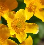 """Antoni Dziuban """"wiosna"""" (2007-04-22 14:03:51) komentarzy: 72, ostatni: Słońce, optymizm i prostota (na grudnie akurat)... ładna jakość :)"""