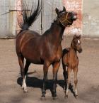 """marco42 """"Koń by się uśmiał"""" (2007-04-22 16:24:04) komentarzy: 11, ostatni: ... dla mnie super ;)"""
