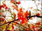 """nossnahoj """"flowersy"""" (2007-04-24 18:03:28) komentarzy: 6, ostatni: b.ładne:}"""