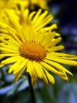 """Włodo """"na żółto..."""" (2007-04-25 14:43:25) komentarzy: 7, ostatni: bardzo fajne... wiosenne..."""