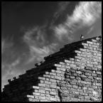 """malisz """"ptasi rocky"""" (2007-04-26 15:59:36) komentarzy: 83, ostatni: pieknie wypatrzone - pzdr."""
