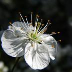 """HEJA """"Z ogródka..."""" (2007-04-27 09:10:44) komentarzy: 13, ostatni: ja też lubie wiosne, pozdrawiam i zapraszam"""
