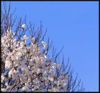 "notamus ""magnolia"" (2007-04-27 20:39:41) komentarzy: 8, ostatni: dobry kadr!"