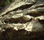 """agakolo """"natura"""" (2007-05-01 14:10:18) komentarzy: 3, ostatni: światło fajnei żywe"""