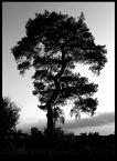 """StarShine """"...b&w..."""" (2007-05-02 22:09:41) komentarzy: 9, ostatni: Ładnie poskręcane to drzewo, ale w cieniach dla mnie zbyt mrocznie"""