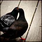 """meduzzzz """"Pocalunek"""" (2007-05-10 11:49:06) komentarzy: 3, ostatni: ... AAA żeee buziak gołębi ? / Szkoda lewej strony, podobają mi sie te czerrrwone oczystka , fajnie zagrały z pazurkami ;) promyki ślę !!!"""