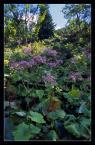 """andrzejj """"***"""" (2007-05-10 21:23:51) komentarzy: 7, ostatni: Miły dla oka, kojący widok! Ładnie pokazany kawałek przyrody.. :)"""