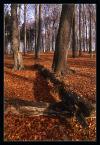 """andrzejj """"****"""" (2007-05-19 17:49:08) komentarzy: 3, ostatni: Super kolorystyka i jak zwykle nienaganna jakość , a leżące drzewo prowadzi wzrok, podoba sie , pozdr."""