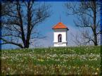 """1852m """"Spotkane."""" (2007-05-19 19:00:47) komentarzy: 13, ostatni: ładne i do tego ta cudna łąka z dmuchawcami"""