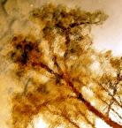 "Anavera ""Impresja na gorące lato"" (2007-05-22 00:26:06) komentarzy: 6, ostatni: Interesująco podane..."
