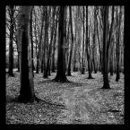 """chemik """""""" (2007-05-24 09:46:41) komentarzy: 5, ostatni: las to nie jest wdzieczny obiekt do fotografowania - tobie sie udalo"""