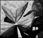 """Jaheiraa """"kwiat"""" (2007-05-26 15:12:12) komentarzy: 0, ostatni:"""