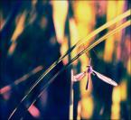 """irmi """"piszczy w trawie"""" (2007-06-02 00:17:17) komentarzy: 6, ostatni: ładnie piszczy... kolorowo"""