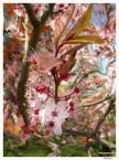 """nadja71 """"jestem kwiat lesiutki puch wykonuje zwiewny ruch"""" (2007-06-04 07:49:40) komentarzy: 8, ostatni: paskudnie mazane ... a moglo byc tak ladnie"""