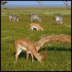 """soban78 """"Trawka pełen wypas"""" (2007-06-04 10:45:29) komentarzy: 12, ostatni: fajne, tylko gdzie żyrafy ;)"""