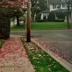 """małe a """"Magnolia"""" (2007-06-04 18:56:06) komentarzy: 8, ostatni: fajne.."""