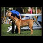 """Mieszko Pierwszy """"kocham cię łobuzie.."""" (2007-06-22 16:15:58) komentarzy: 13, ostatni: ...każdy, kto kocha psy zauważy w tej fotografii właśnie TEN moment... to szeptanie jak w tytule... przyjaźń... dobrze to uchwyciłeś..."""