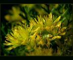 """beige """"... radość ..."""" (2007-06-24 20:11:39) komentarzy: 35, ostatni: ciekawie to w kadrze poukładane..."""