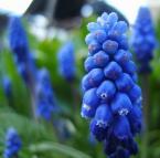 """pyciar """"kwiatek"""" (2007-06-26 23:15:57) komentarzy: 9, ostatni: nie wierz wazeliniarzom , to jest gniot a nie dobre zdjęcie ."""