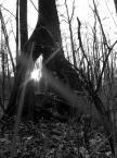 """Adaśko I """"Drzewiec"""" (2007-06-27 13:20:32) komentarzy: 6, ostatni: na tak"""