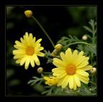"""deksio """"W ogrodowych zakamarkach..."""" (2007-07-01 22:17:53) komentarzy: 11, ostatni: ;-))))))))))))))"""
