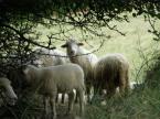 """Maciek Froński """"Milczenie Owiec"""" (2007-07-10 20:28:16) komentarzy: 2, ostatni: :)"""