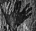 """Nagalfar """"eksperyment"""" (2007-07-16 21:46:02) komentarzy: 2, ostatni: heyah z okresu dinozaurów"""